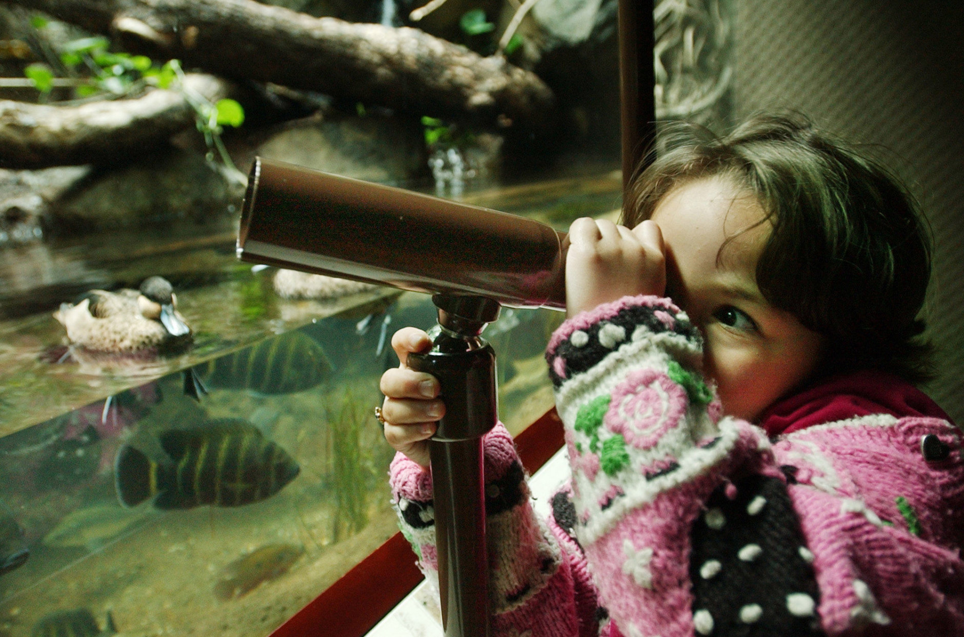 ** ADVANCE FOR WEEKEND EDITIONS, MAY 25-27 **Six year-old Bailey Bass of Garrison, N.Y., peers through a telescope to look at wildlife at the Bronx Zoo Tuesday, May 14, 2002, in New York. When non-New Yorkers think of the Bronx, Yankee Stadium and the Bronx Zoo come to mind. But there's much more than baseball and beasts in the only part of Gotham that's on the U.S. mainland. (AP Photo/Kathy Willens)