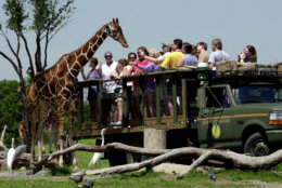 ** FILE ** This April 3, 2001 file photo, shows guests at Busch Gardens Tampa Bay reaching out to feed a giraffe during a safari ride in Tampa, Fla.  (AP Photo/Chris O'Meara, File)