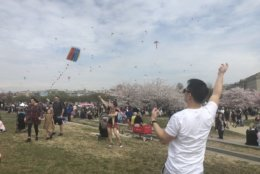Crowds gather to see the kites and cherry blossoms on March 30, 2019. (WTOP/Melissa Howell)