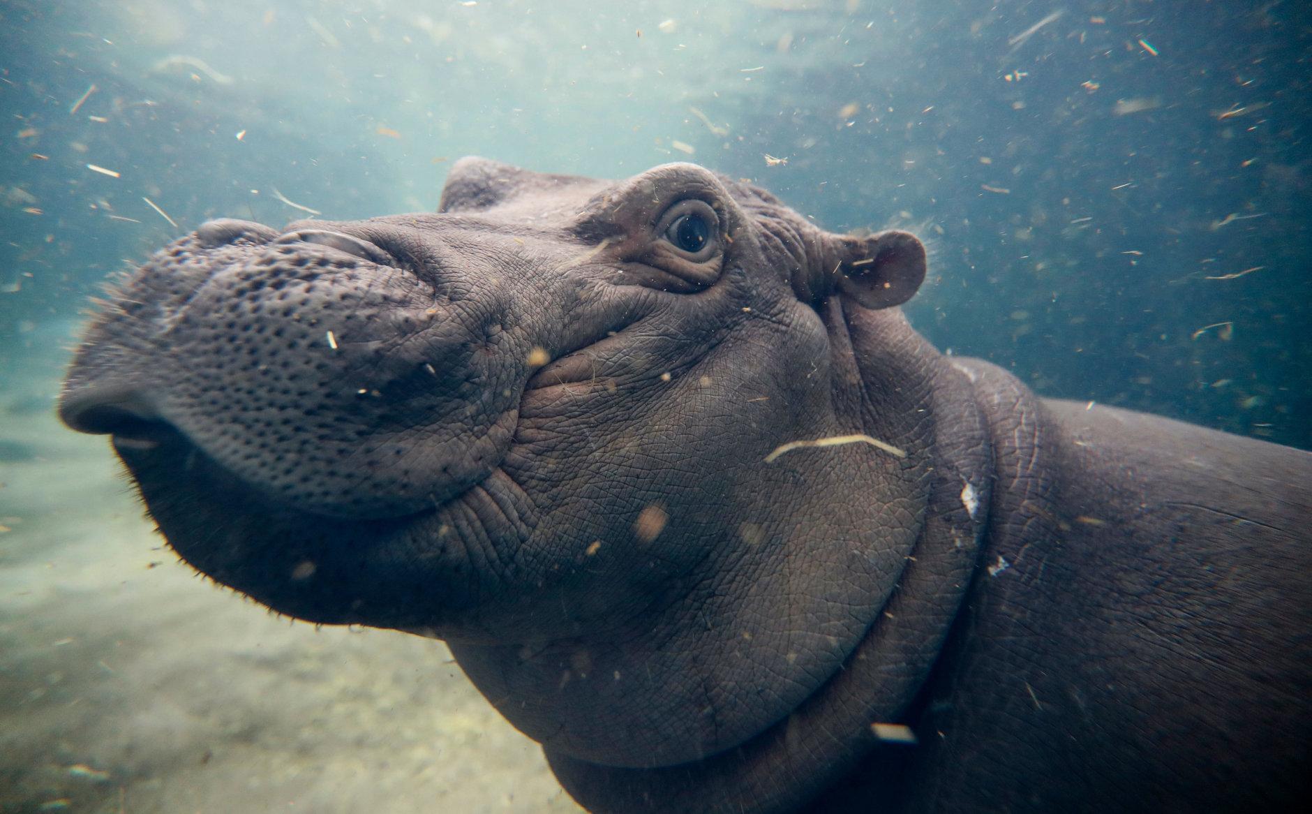 30 best zoos in the US | WTOP