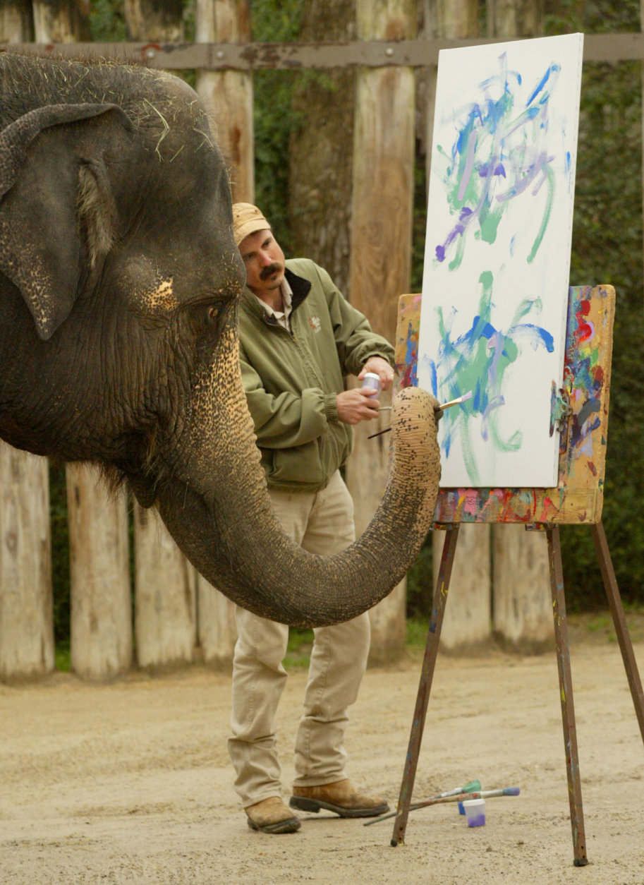 Rasha, an Asian elephant, paints an original work of art, Wednesday, Jan. 5, 2005, as elephant manager Jason Barr checks her work at the Fort Worth Zoo in Fort Worth, Texas. The art is to help raise funds to aid the victims of the Asian tsunami. Rasha, who was born in Thailand in 1973, began her painting career in 1996 and has sold several hundred paintings. The proceeds from the sale of the 24-by-48 inch painting will be donated to the American Red Cross International Response Fund and will be on saleon E-Bay from January 5 to the 12th. (AP Photo/Fort Worth Star-Telegram, Jill  Johnson)