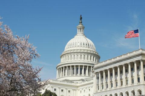Ex-Dem. staffer admits doxing GOP senators attending Kavanaugh hearing