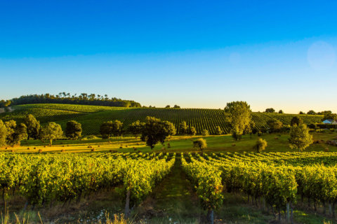 Wine of the Week: Betting on the (Bordeaux) future