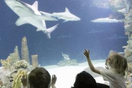 Rachel Klatt, 7,  of Columbus, Neb., points at a shark while visiting Omaha's Henry Doorly zoo on a school trip, Tuesday, May 23, 2006.(AP Photo/Nati Harnik)