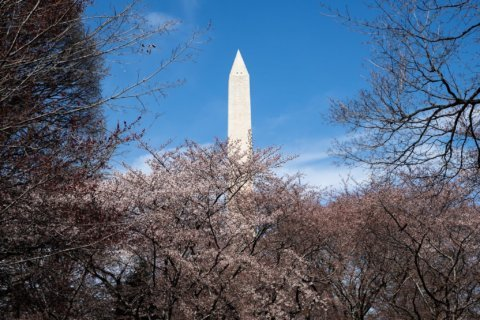 Ahead of July Fourth crowds, DC to test emergency alert system