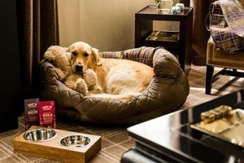 These pet-friendly hotels are rolling out the red carpet for your favorite traveling companion