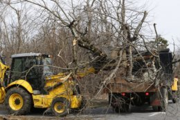 National Park Service employees operate machinery as they clear debris from winter storms at the Loft Mountain campground in the Shenandoah National Park in Crozet, Va., Wednesday, March 20, 2019. The southern portion of the Skyline drive in the park has been closed since November due to severe winter storms. (AP Photo/Steve Helber)