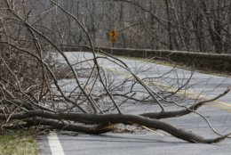 Broken trees from severe winter storms block the Skyline Drive near the Loft Mountain campground in the Shenandoah National Park in Crozet, Va., Wednesday, March 20, 2019. The southern portion of the Skyline drive in the park has been closed since November due to severe winter storms. (AP Photo/Steve Helber)