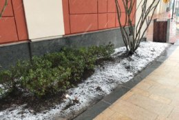 Snow sticks to grassy areas outside WTOP in Friendship Heights. (WTOP/Reem Nadeem)