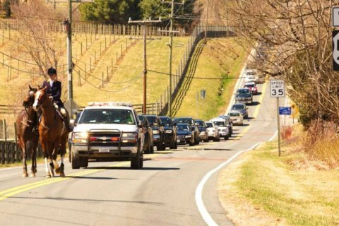 'Some Response' indeed: Horse tosses rider during race, hoofs it down Route 50