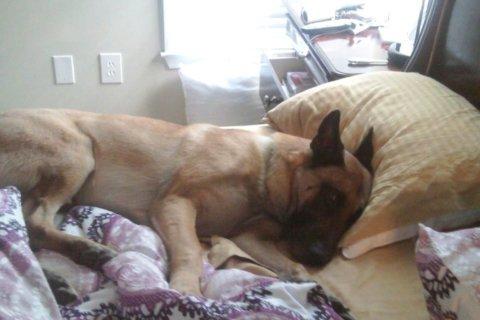 PHOTOS: Fairfax County senior patrol dog retires after 10 years