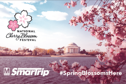 What to expect with Metro for cherry blossom peak bloom weekend