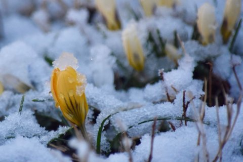 PHOTOS: Snow falls in and around DC