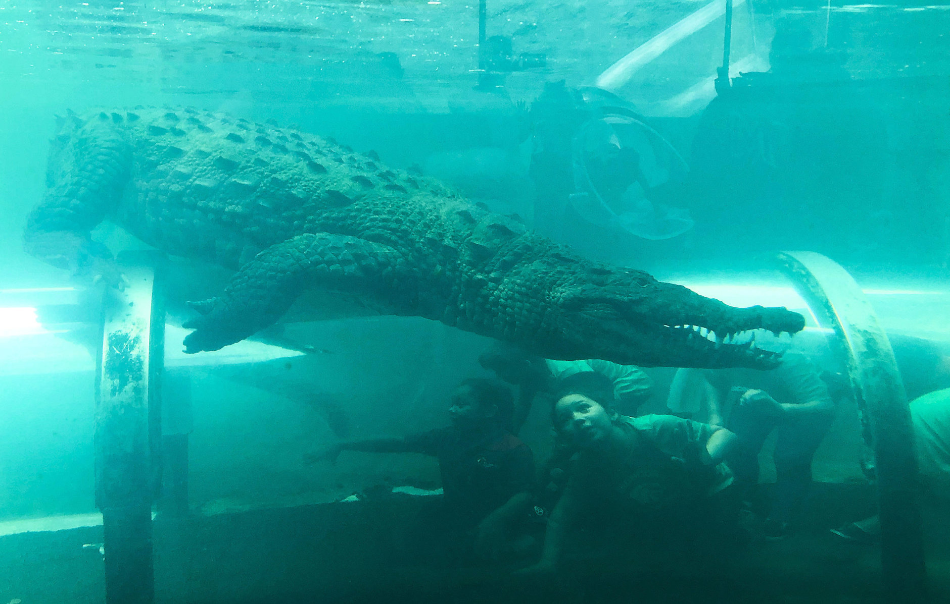 A child looks up as an American crocodile swims above at Zoo Miami on Thursday, Feb. 21, 2019, in Miami. (AP Photo/Brynn Anderson)
