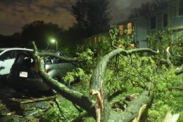 A tree is seen after falling swiping a townhouse and crushing a parked car along Harvest Green Court after a tornado touched down in Reston, Virginia. (WTOP/Dave Dildine)