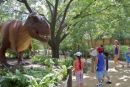 The National Zoo will feature life-size animatronic replicas of various dinos. (Courtesy National Zoo)