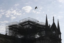 A pigeon flies over Notre Dame cathedral Friday, April 19, 2019 in Paris. Rebuilding Notre Dame, the 800-year-old Paris cathedral devastated by fire this week, will cost billions of dollars as architects, historians and artisans work to preserve the medieval landmark. (AP Photo/Thibault Camus)