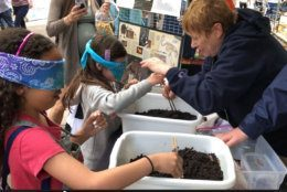 """Children played a game called """"Blind as a Kiwi,"""" and learned what it was like to forage for food. (WTOP/Kristi King)"""