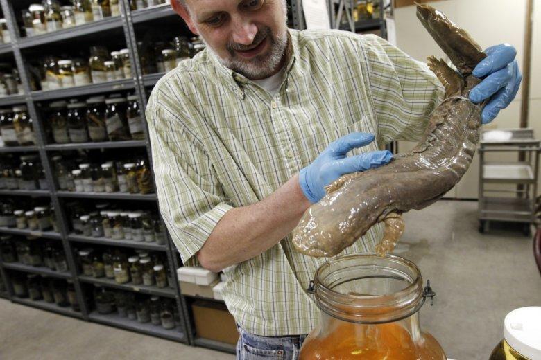 Eastern hellbender voted Pennsylvania's official amphibian   WTOP