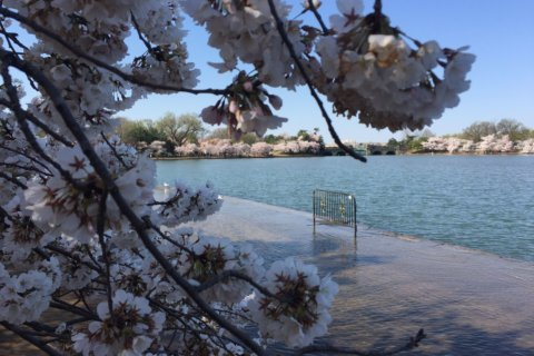 Park service, preservationists launch effort to 'Save The Tidal Basin'