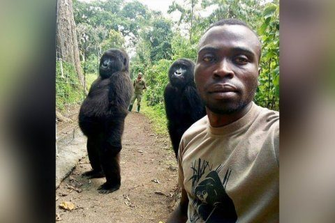 Gorillas perfect their selfie style in photo with park ranger