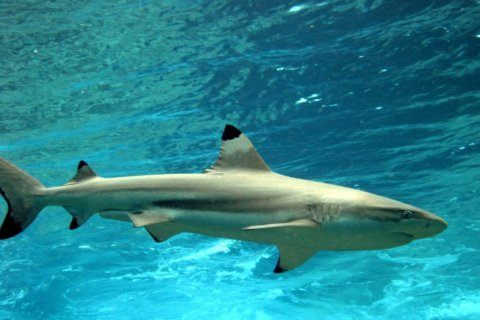 Harvest of shark species to be cut to avoid overfishing
