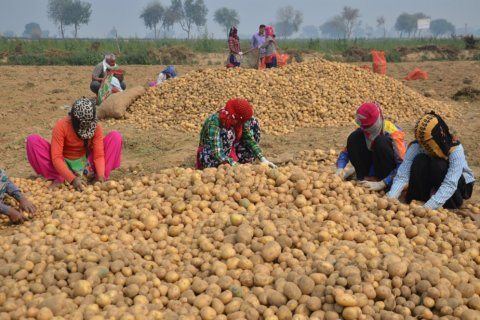 PepsiCo is suing farmers in India for growing the potatoes it uses in Lays chips