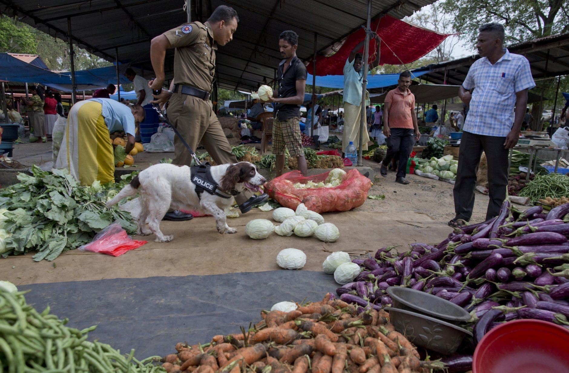 A police dog sniffs for explosives at a market in Ampara, Sri Lanka, Sunday, April 28, 2019. Police in Ampara showed The Associated Press on Sunday the explosives, chemicals and Islamic State flag they recovered from the site of one security force raid in the region as Sri Lanka's Catholics celebrated at televised Mass in the safety of their homes. (AP Photo/Gemunu Amarasinghe)