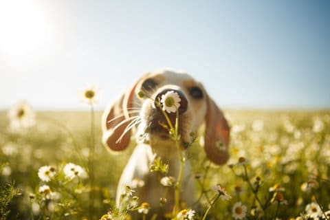 How to spot seasonal allergies in pets — and how to alleviate the symptoms