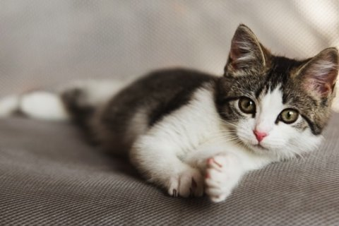 USDA ceases experiments on kittens for food safety research at Maryland laboratory