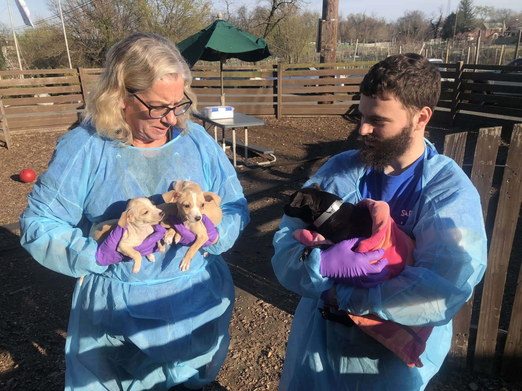 All dogs must pass a medical and behavioral examination before they can be put up for adoption,. (WTOP/Mike Murillo)