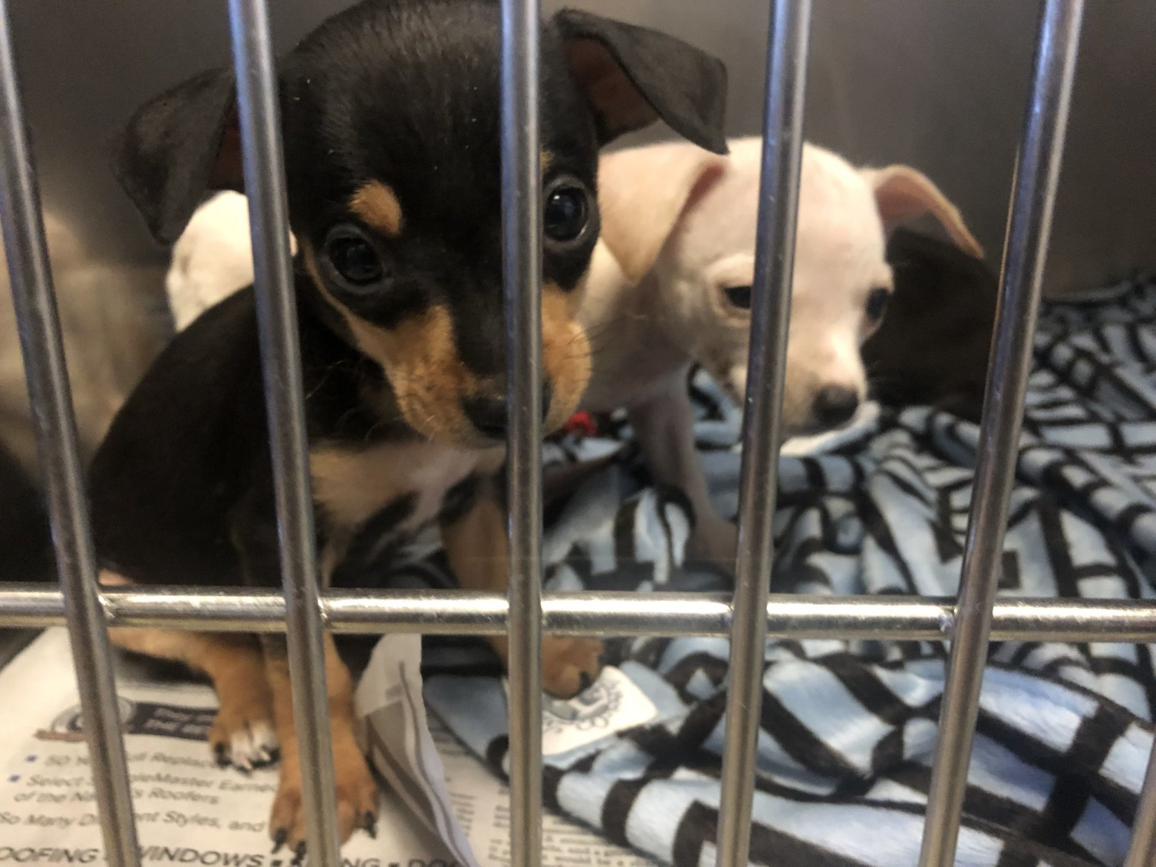 Those interested in adopting can begin inquiries as early as Wednesday. (WTOP/Mike Murillo)