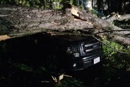 A tree falls on a vehicle in Reston, Virginia, on Friday, April 19, 2019, after two storms passed through the area. (Courtesy Greg in Reston)