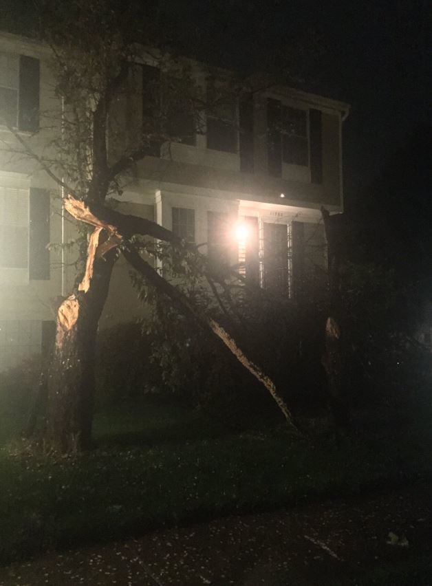 In North Reston, a tree is split, after a storm and a confirmed tornado touchdown on Friday, April 19, 2019. (Courtesy Leanne Wiberg)