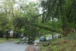 The storms left an uprooted evergreen resting on overhead wires over Wellington Street in Lanham. (WTOP/Dave Dildine)