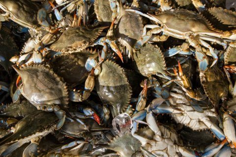 2nd man pleads guilty to falsely labeling foreign crab