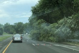 The storm may be over, but a downed tree blocks a lane on the Midcounty Highway in Gaithersburg, Maryland. (WTOP/Mike Murillo)