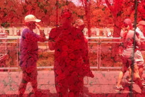 Red poppies near Lincoln Memorial mark sacrifices of American service members