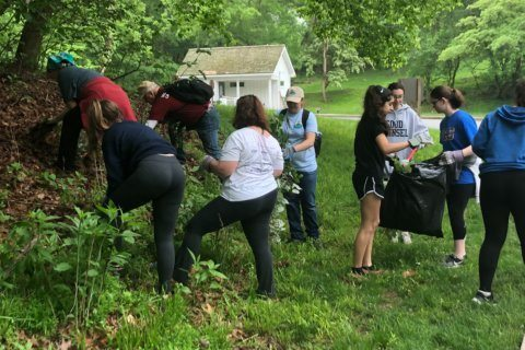 Volunteers come out for C&O Canal Pride Days Clean-Up