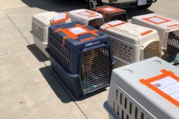 Animals that had been in the Tulsa, Oklahoma, area arrived Friday afternoon in D.C. (Courtesy Humane Rescue Alliance)