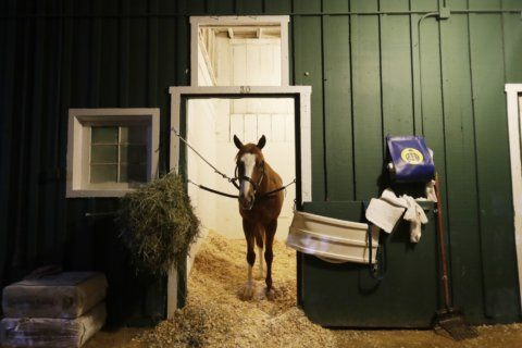 War of Will wins Preakness featuring riderless running horse