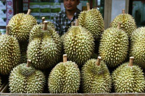 Durian fruit stink prompts Australian university evacuation