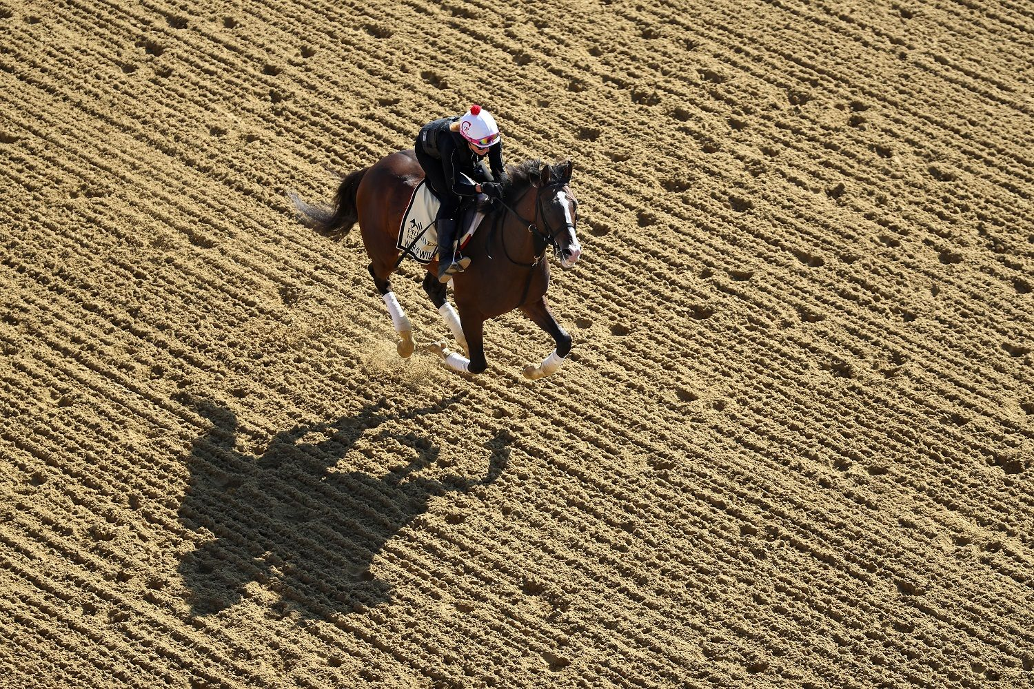 BALTIMORE, MARYLAND - MAY 15: War of Will trains on the track during a training session for the upcoming Preakness Stakes at Pimlico Race Course on May 15, 2019 in Baltimore, Maryland. (Photo by Rob Carr/Getty Images)