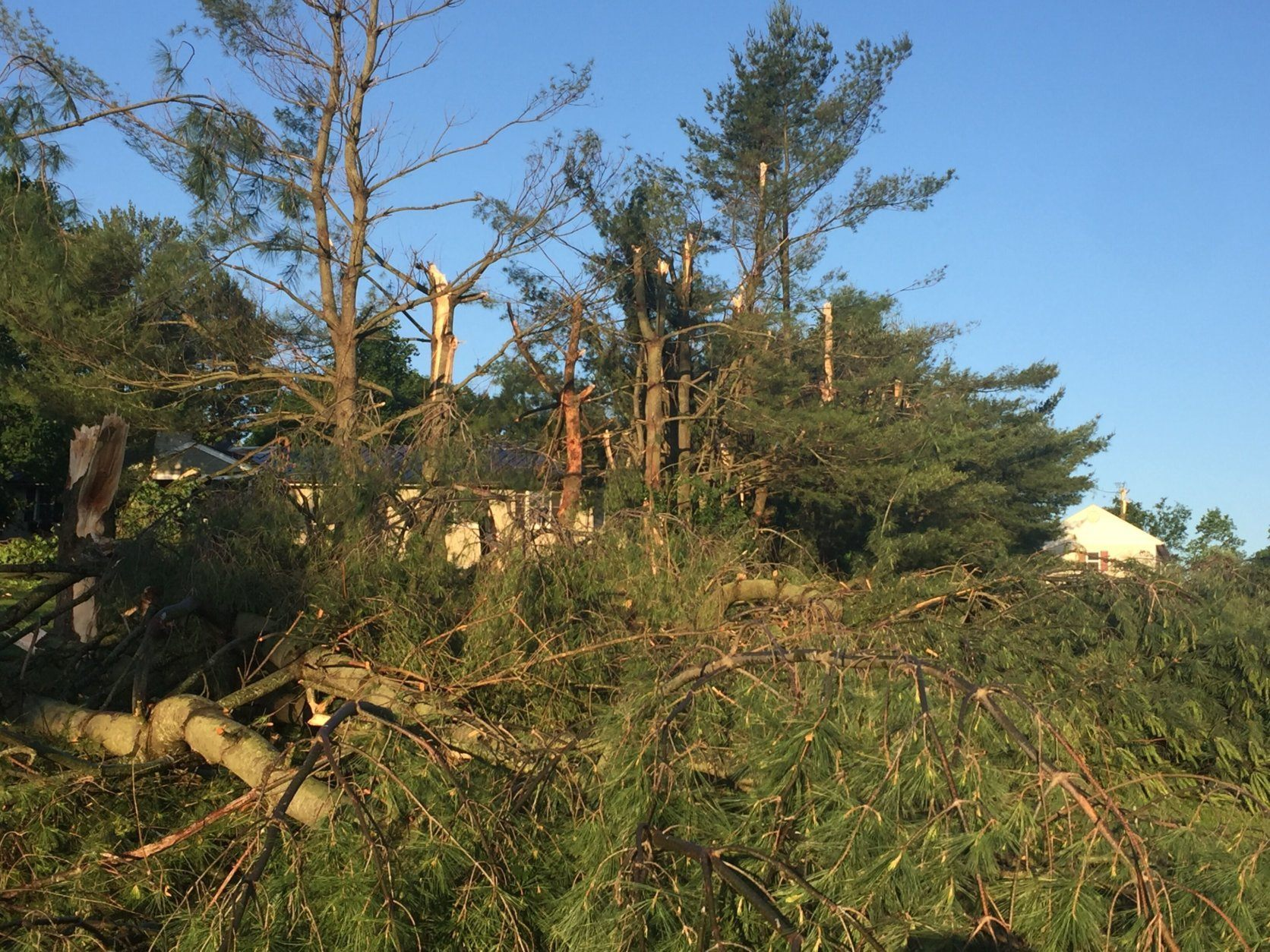 Many trees were toppled over Angela Butler's backyard after Thursday's tornado in Howard County. She could barely see her driveway Friday morning. (WTOP/John Domen)