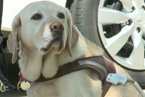 WATCH: Blind woman says Lyft drivers turn her down when they see her service dog