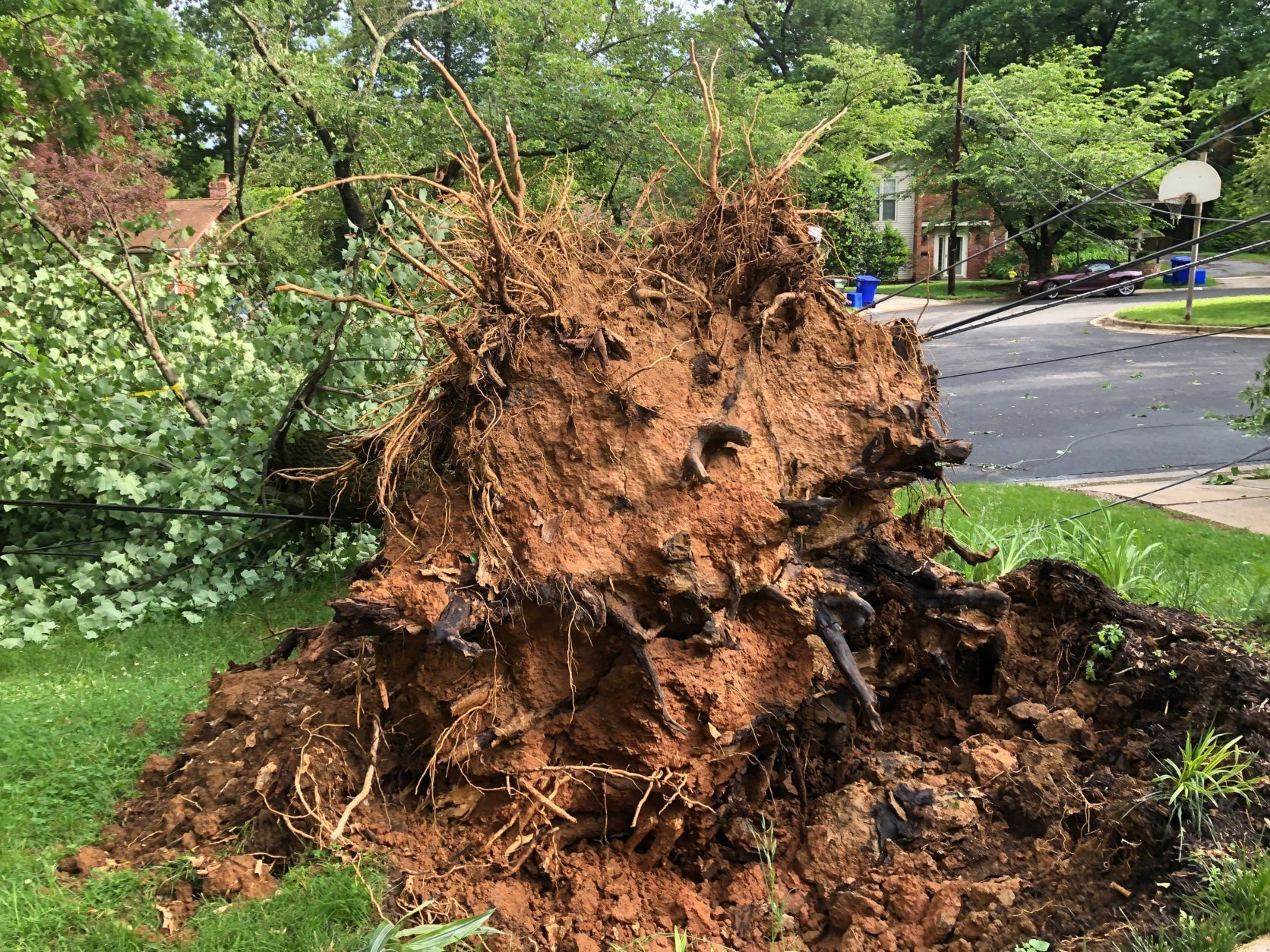A tree falls in a Rockville, Maryland, neighborhood after a storm on Thursday, May 23, 2019. (WTOP/Mike Murillo)