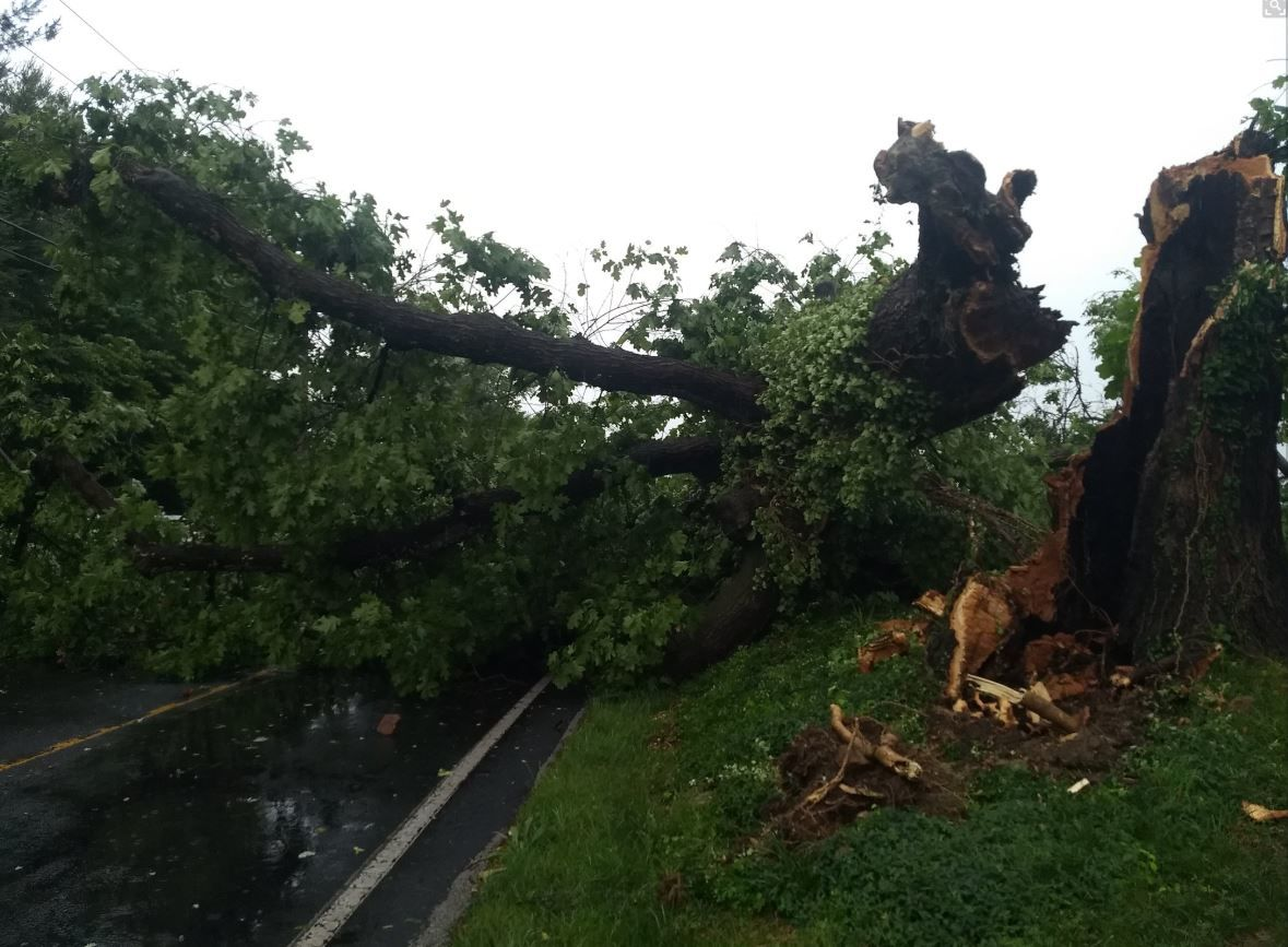 A fallen tree blocks Folly Quarter Road in Howard County, Maryland, after severe weather passed through the area on Thursday, May 30, 2019. (Courtesy Fano S via Twitter)