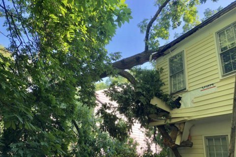 Family displaced after tree falls onto Potomac home, into boy's bedroom