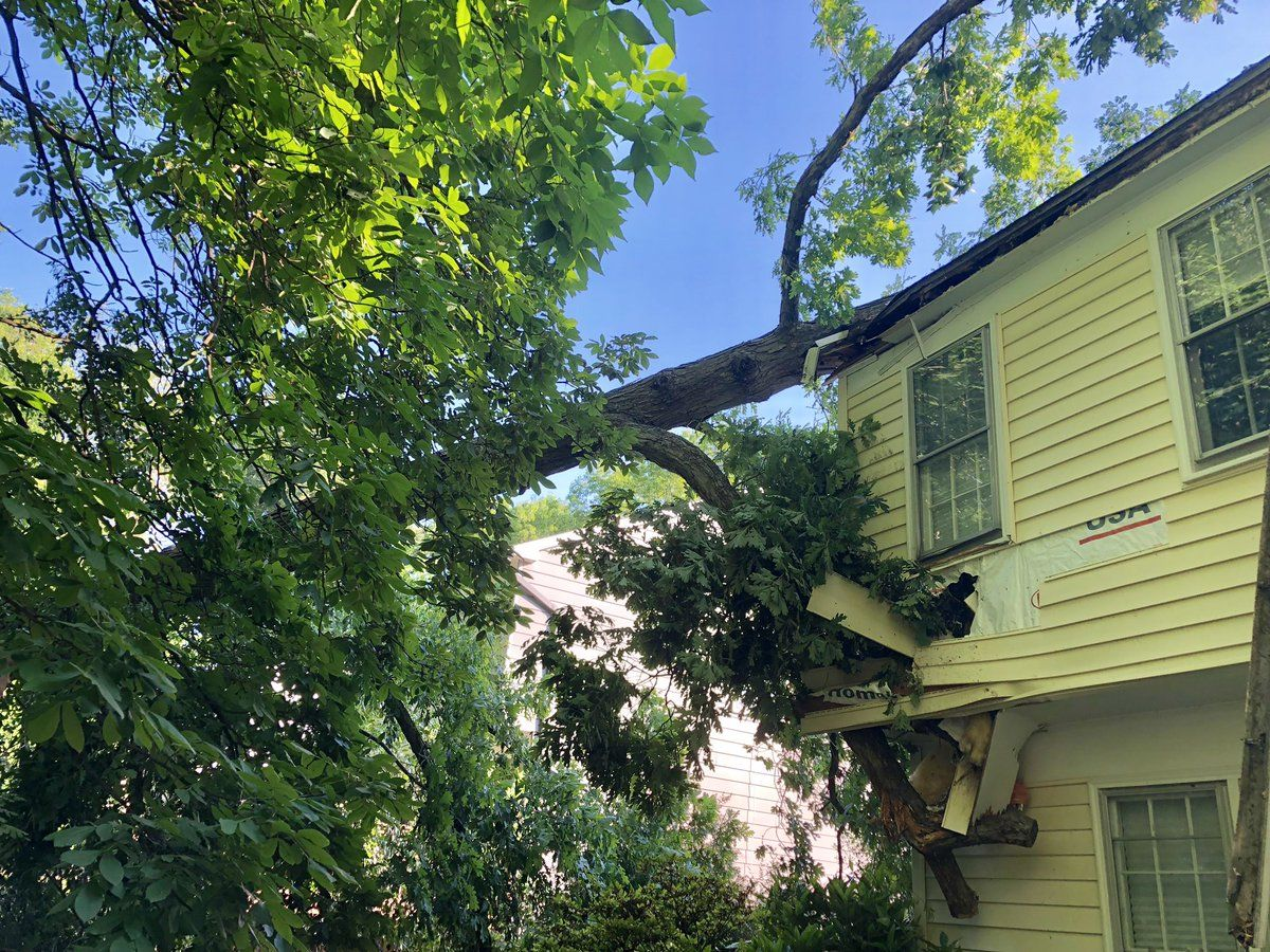 Photo of the tree that fell onto a house in Potomac, Maryland. (WTOP/Nick Iannelli)