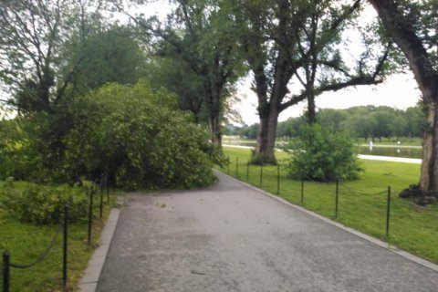 DC cherry trees damaged during Thursday's storms